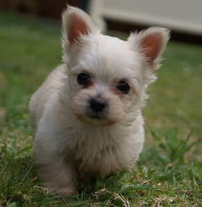 Puppy at ground level.